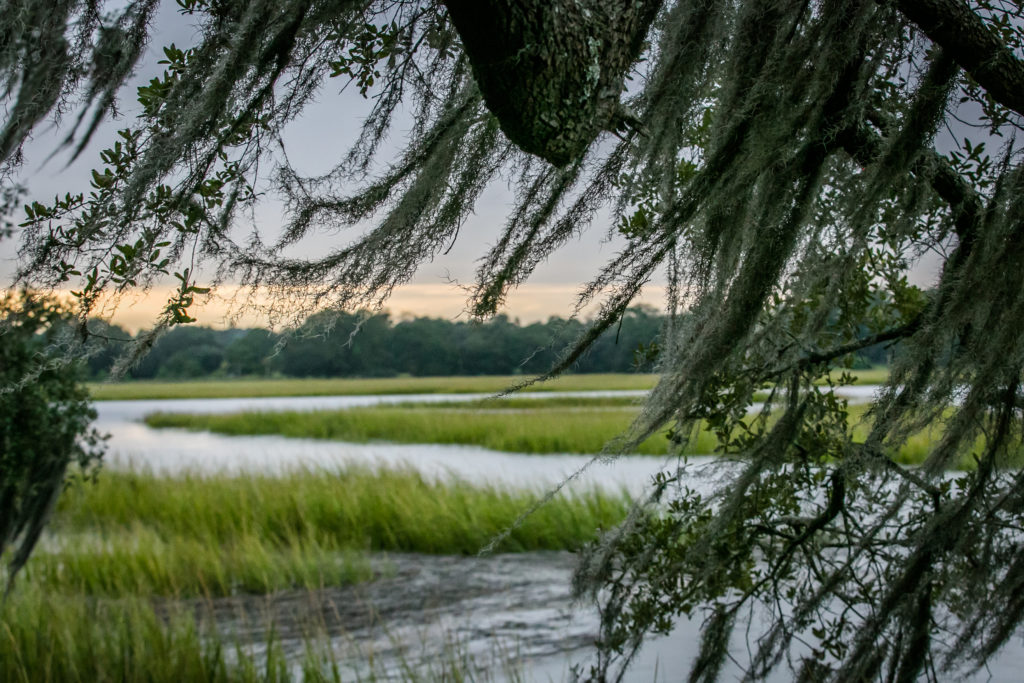 Spanish moss in Moon River District